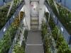 На МКС впервые попробуют овощи, выращенные в космосе