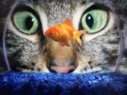 Зачем кошкам вертикальные зрачки