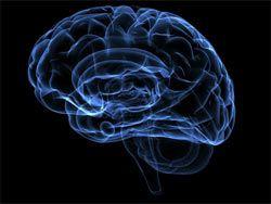 Группа ученых создала искусственный носитель интеллекта