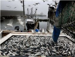 Норвегия отказала России в проверке рыбных предприятий