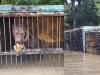 В затопленном уссурийском зоопарке эвакуируют зверей