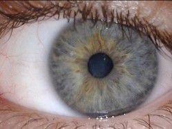 Японцы успешно пересадили сетчатку глаза