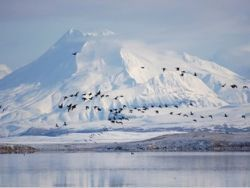 Экологи о последствиях климатических изменений в США