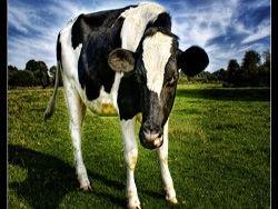 Новость на Newsland: Как объяснить детям, почему мы питаемся животной пищей