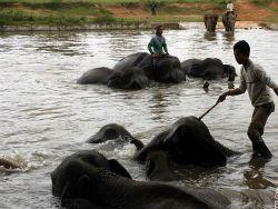 Новость на Newsland: В Индонезии появился медицинский центр для слонов