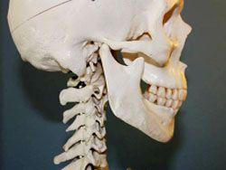 Литовские ученые научились полностью восстанавливать кости