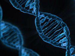 Ученые впервые обнаружили гены интеллекта