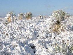 Север Мексики укрыло снегом