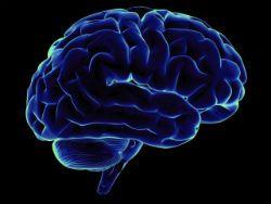 Ученые обнаружили в мозге