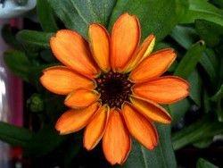 Новость на Newsland: На МКС впервые в истории распустился цветок