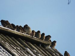 В российских лесах стало меньше зимующих птиц