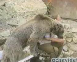 Видео очевидца: Медведь чуть не оставил дрессировщика без головы (видео)