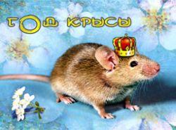 Фен-шуй: Чему научит нас Год Крысы?