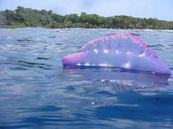 Почти 300 человек подверглись нападению медуз в Бразилии