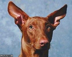 В США три собаки унаследовали $800 тыс.