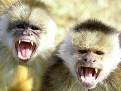 Безработная индийская молодежь займется стерилизацией обезьян