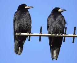 Многие птицы невосприимчивы к лекарственным препаратам