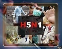 """Ученые США выяснили, как \""""птичий грипп\"""" заражает человека"""