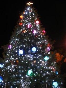Главную новогоднюю елку Австрии пустят на скворечники
