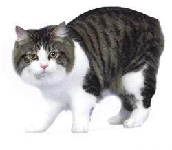 Запретит ли Кнессет стричь кошкам когти?