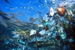«Континенты» плавающего мусора на самом деле существуют