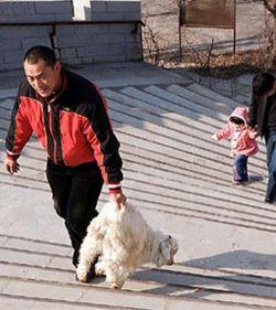 В Китае детей приглашают принять участие в расправе над животными (фото)