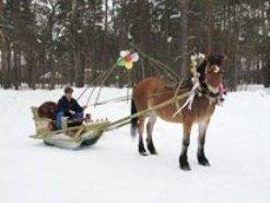 Под Тамбовом угнали лошадь с санями