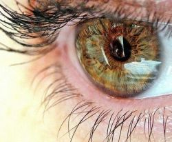 Ученые обнаружили в человеческом глазу вторую светочувствительную систему