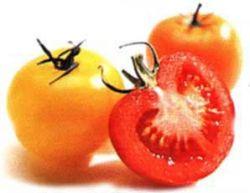 Каждый пятый испанский школьник не знаком со вкусом помидора