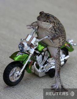 В Патайе живет лягушка, любящая экстрим (фото)