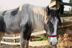 Более 100 лошадей были заморены голодом и брошены умирать в тесном загоне на юго-востоке Англии (фото)