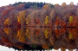 В Нью-Йорке клонируют исторические деревья