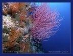 Выявлены причины вымирания кораллов