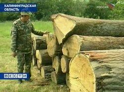 Незаконные вырубки лесов в России продолжаются