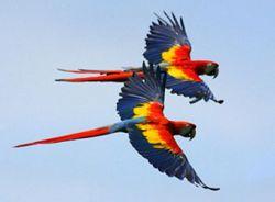 Говорящий попугай спас магазин от грабителей
