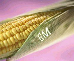 Во Франции запретят генетически измененные продукты