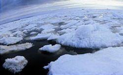 В Финском заливе на дрейфующей льдине оказались пять рыбаков