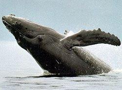 Власти Японии приказали китобоям освободить двух активистов экологического движения