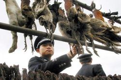 Число жертв птичьего гриппа в Индонезии увеличилось до 96 человек
