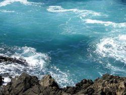 Морская вода краснеет из-за ухудшения экологической ситуации