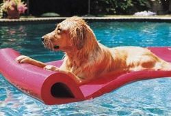 Аквааэробика для собак – это модно
