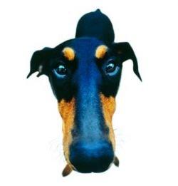 Венгерский компьютер переводит с собачьего языка