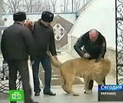 На территории харьковской тюрьмы появился зоопарк (видео)