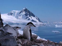 Эксперты: таяние арктических ледяных шапок на 30 лет опережает график