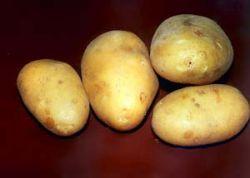 В кемеровском Мариинске планируют установить памятник картошке
