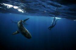 Необычное хобби: пятьдесят лет в обществе акул (фото)