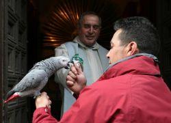 Испанские священники благословили домашних животных (фото)