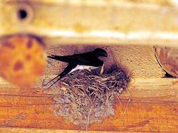 В Таиланде строят квартал для птиц