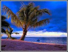 Пальмовый долгоносик угрожает красотам Ривьеры