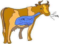 Шведский университет потратит полмиллиона долларов на изучение коровьей отрыжки